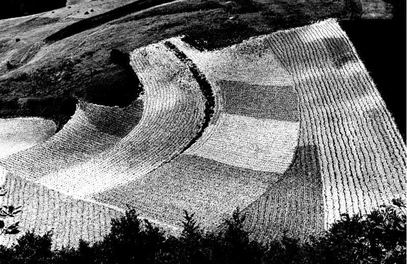 Mario Giacomelli Presa di coscienza sulla natura Paesaggio agricolo marchigiano 1985
